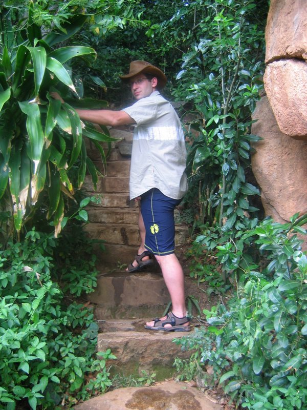 Entering the jungle